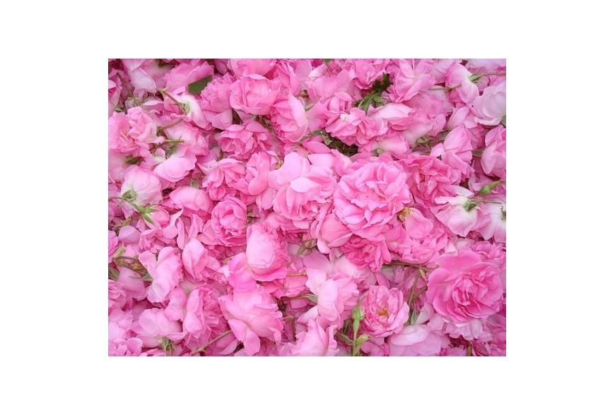 Rožių KARALIENĖ – Rožė Damascena